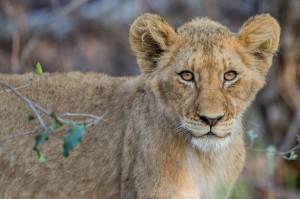 Tangala safari camp--5