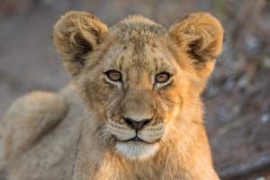 Tangala safari camp--6