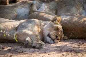 Tangala safari camp (12 of 66)