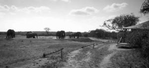 Tangala safari camp (55 of 66)